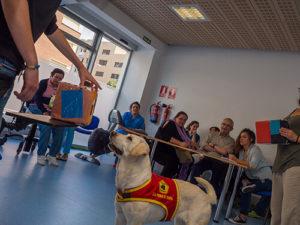 perros guia17
