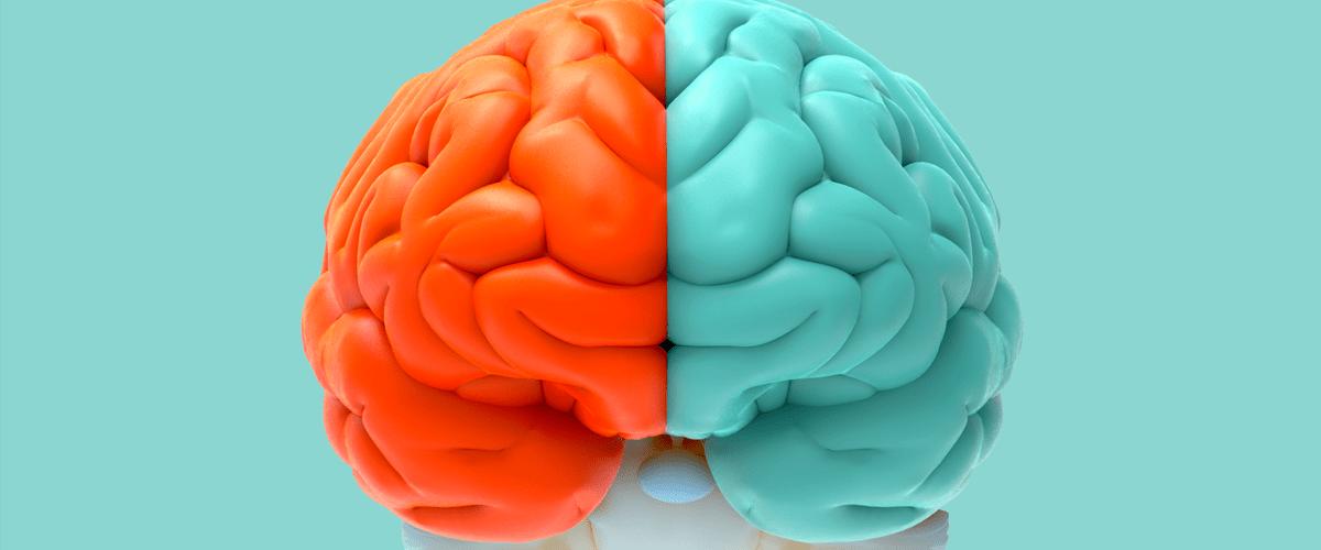 Entendiendo el cerebro: hemisferio derecho vs hemisferio izquierdo