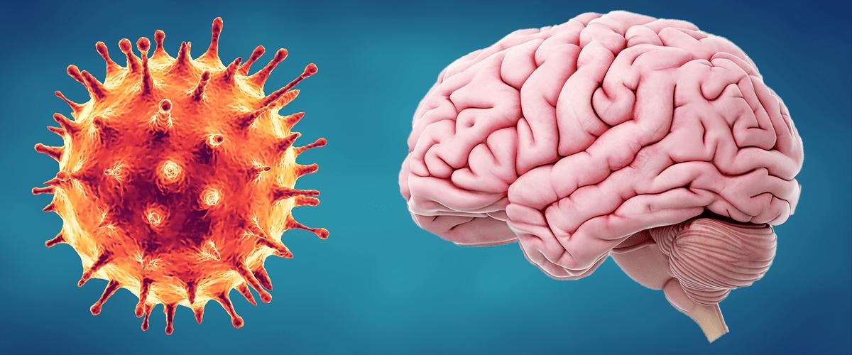 Infecciones virales como el COVID-19 y sus efectos en el cerebro