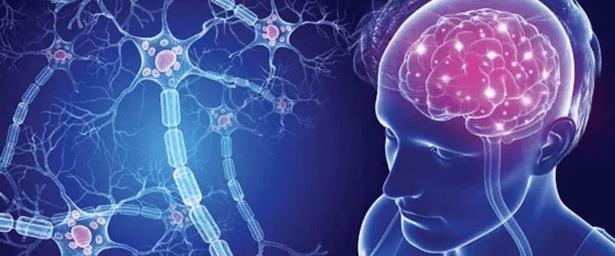 Esclerosis Múltiple y la afectación al SNC