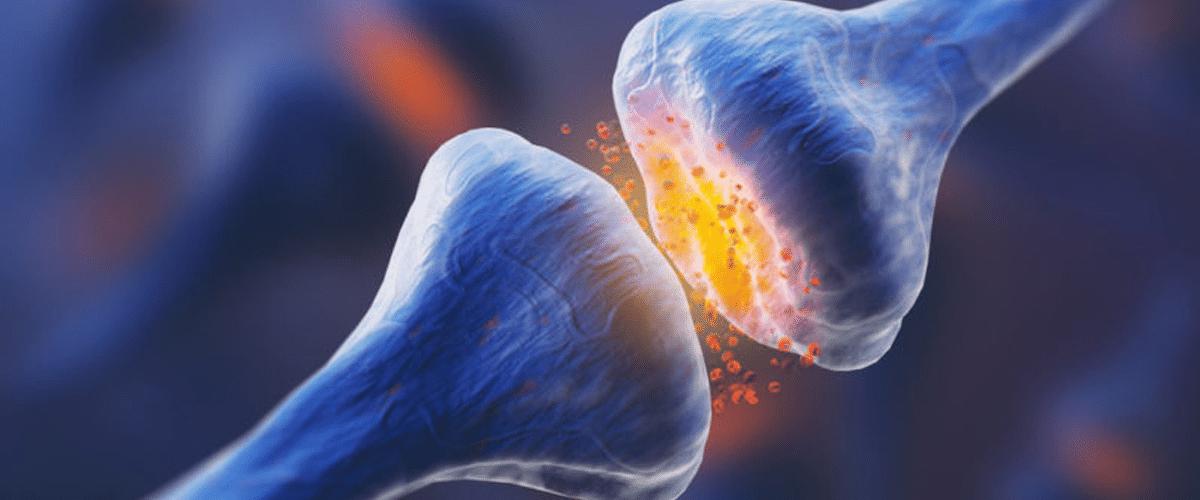 sinapsis en el cerebro